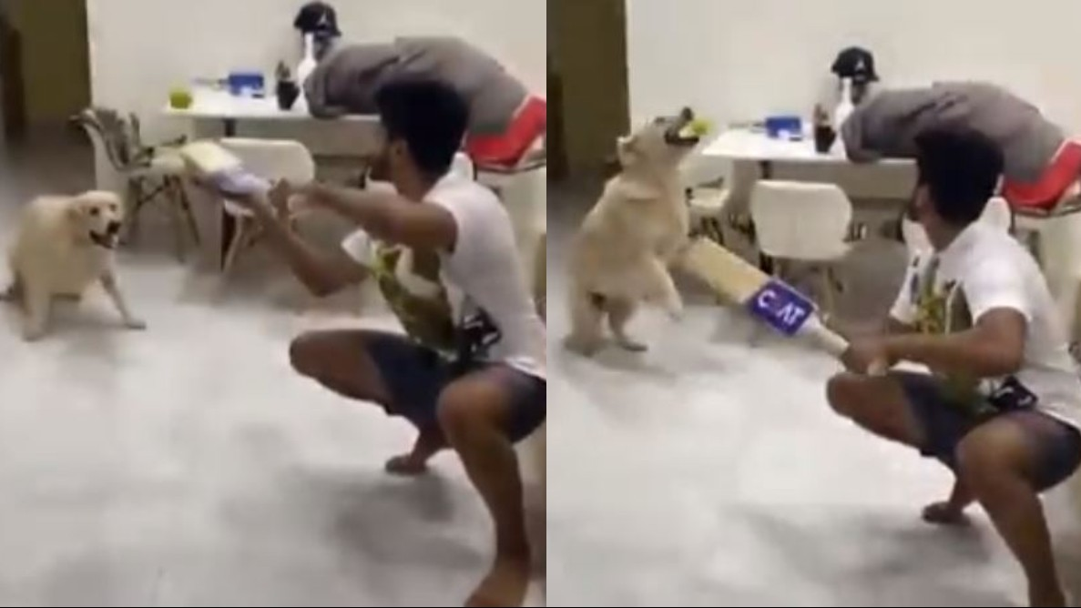 WATCH- Shreyas Iyer and his pet dog Betty recreate Kane Williamson's slip catch to his canine