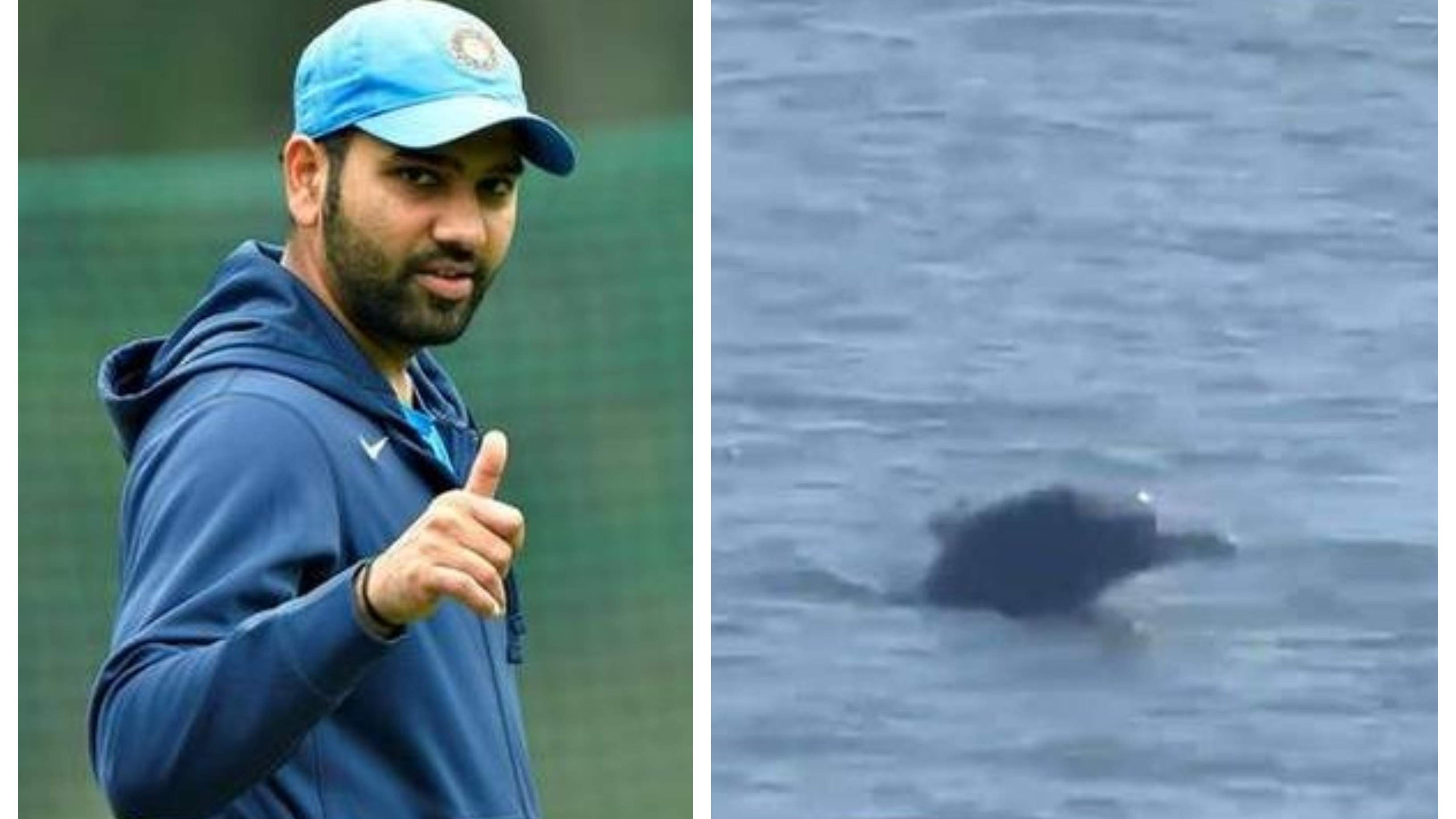 Rohit Sharma elated to see pictures of dolphins swimming near the shores of Mumbai