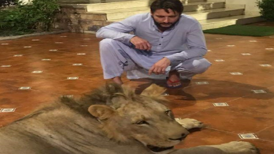 Shahid Afridi shares picture with a lion and gets lashed out by the Twitterverse