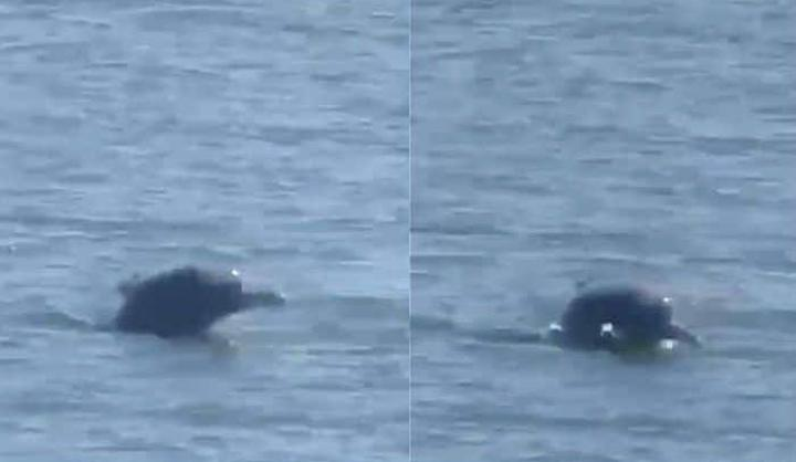 Dolphins spotted swimming near the shores of Mumbai | Twitter