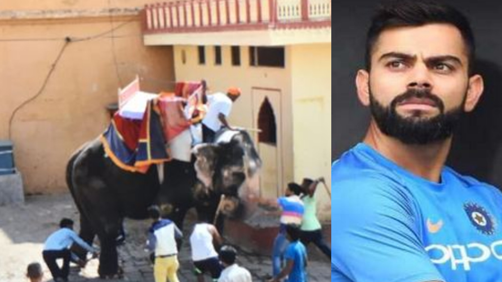 Virat Kohli backs PETA's call for relocation of Jaipur's Elephant no. 44
