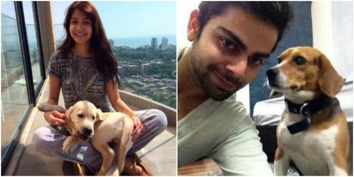 Virat Kohli and Anushka Sharma are avid animal lovers and own pets