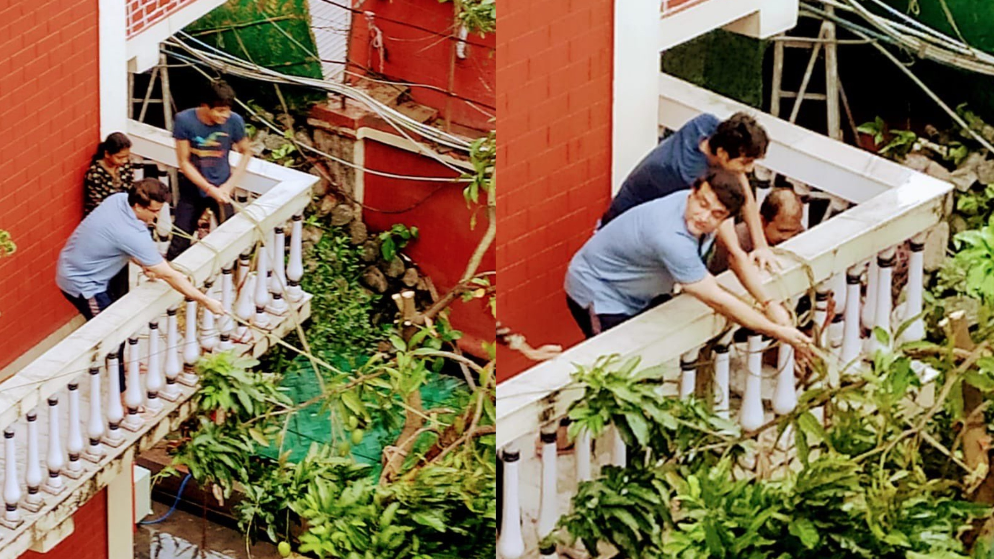 Ganguly saves a mango tree uprooted by Cyclone Amphan at home; fans link it to 2002 NatWest final