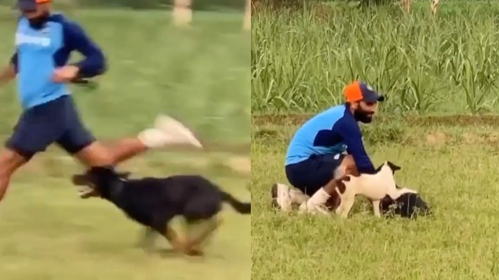 WATCH: Mohammad Shami's pet dog 'Jack' helps him in training