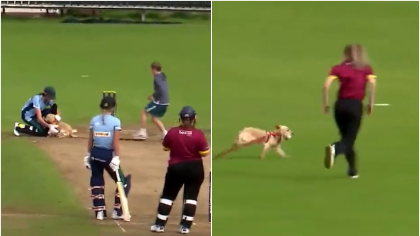 ICC announces a 'special award' for the pitch-invader dog