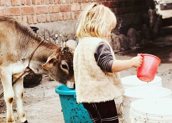 Picture of Jonty Rhodes' daughter India feeding water to a calf is winning internet