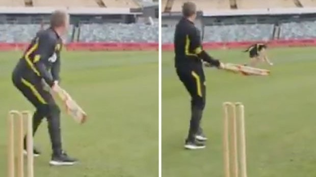 WATCH: Manchester United manager Ole Gunnar Solskjaer shows his cricket skills at WACA