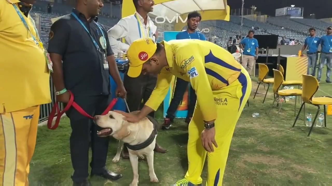 IPL 2018: WATCH-  प्लेऑफ में पहुँचने के बाद इस बेजुबान ने दी धोनी को सलामी