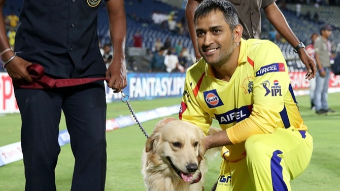 WATCH: CSK skipper MS Dhoni shows his love for canine friends again