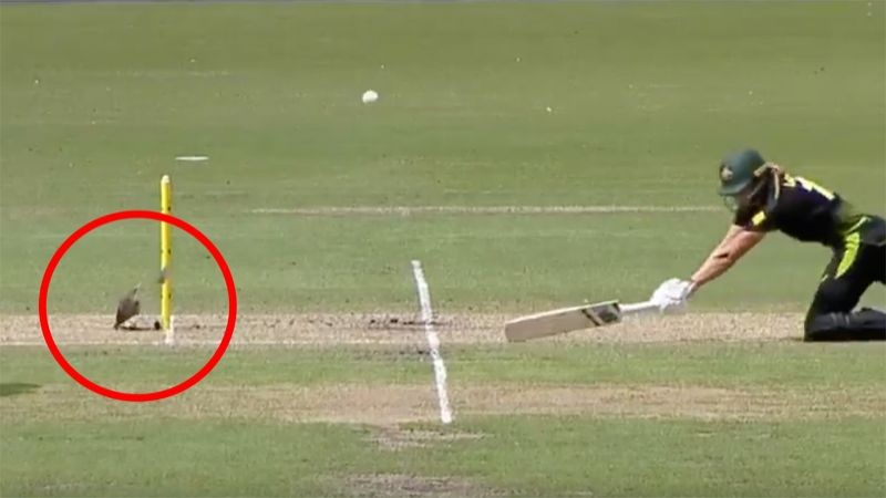 WATCH- Meg Lanning saved from a runout by the stump mic unit during tri-series final
