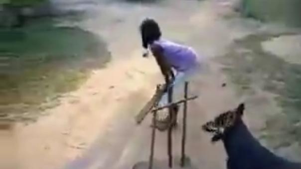 सिमी गरेवाल ने पोस्ट किया बच्चों के साथ क्रिकेट खेलते कुत्ते का वीडियो, लोग बोले 'धोनी का कुत्ता'