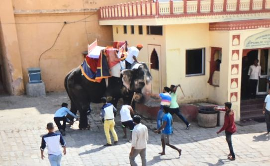 An elephant being abused by its handlers at Amber Fort in Jaipur | PETA India