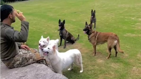 WATCH: MS Dhoni gives his pet dogs catching practice at his farmhouse